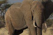 80 Ekor Gajah Mati Diracun Sianida di Zimbabwe