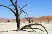 Dunia Sudah Dilanda Anomali Cuaca