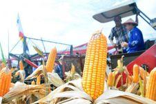 Ekspor Jagung Indonesia adalah Keniscayaan...