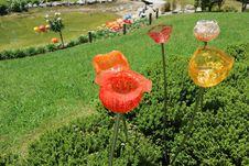 Taman Cantik Penuh Bunga Gelas di Taupo