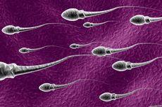 Pelumas Seksual Juga Pengaruhi Kualitas Sperma