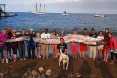 Makhluk Laut Raksasa Ditemukan di Lepas Pantai California