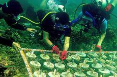 Pecinta Diving di Kolaka Lakukan Transplantasi Karang