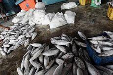 Kementerian KP: Stok Ikan Aman