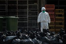 China Catat Satu Turis Asal Hongkong Mengidap H7N9