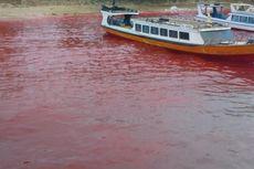 Warna Air Laut Maluku Tengah Berubah Merah, Apa Sebabnya?