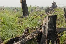 Kisah Pohon Kelapa Sawit di Tengah Tunggul Kayu yang Terbakar