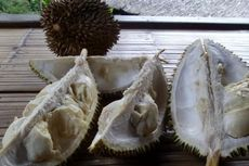 Durian Baduy Gagal Panen, Masih Ada Aktivitas Lain...
