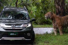 Petualangan BR-V Bertemu dengan Binatang Buas