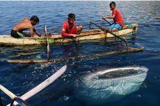 Banyak Diburu dan Diperdagangkan, Spesies Langka Indonesia Terancam