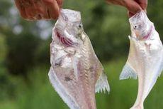Ikan Paling Aneh di Daratan Australia