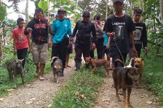 Kisah Perburuan di Lereng Gunung Slamet, Libatkan 7 Anjing dan Bergerak dari 3 Titik