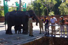 KLHK: Konflik Gajah dan Manusia karena Hutan Beralih Fungsi