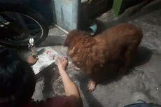 Petugas Damkar Evakuasi Anjing yang Tercebur ke Sumur di Ciracas