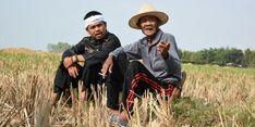 Demi Petani, 46.000 Hektar Sawah di Purwakarta Diasuransikan