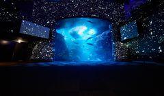 Cuma di Jepang, Panorama Hamparan Bintang di Tengah Akuarium