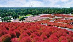 Nikmati Musim Gugur yang Berbeda di Jepang