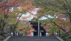 Cantiknya Musim Gugur dan Pohon Maple di Kyoto, Jepang