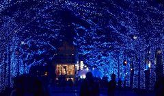 """Musim Dingin di Jepang, Ini """"Terowongan Biru"""" Paling Instagramable!"""