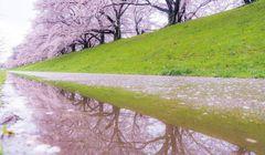"""Ini Tempat Melihat Sakura yang """"Instagramable"""" di Kyoto!"""