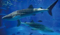 Osaka Aquarium, Apa yang Berbeda Pada Malam Hari?
