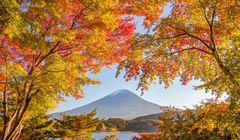 Catat, Ini Jadwal Puncak Musim Perubahan Warna Dedaunan Musim Gugur Tahun 2018