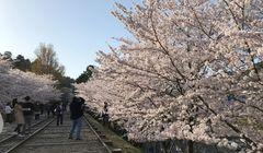 """""""Solo Traveling"""" di Kyoto? Contek Panduan Berikut Ini..."""