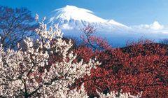 4 Pemandangan Bunga Musim Dingin di Jepang yang Cocok untuk Berkencan