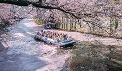 10 Tempat Terbaik untuk Melihat Sakura di Tokyo