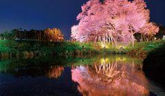 6 Spot Sakura di Fukuoka yang Wajib Dikunjungi Meskipun hanya Satu Kali!