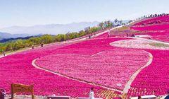 """Itinerary"" Keliling Desa Toyone nan Indah, Cocok untuk Liburan Musim Panas di Jepang"