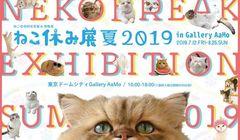 Gemas! Pameran Foto di Tokyo Ini Menampilkan Kucing-kucing yang Lucu