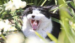 Pulau di Jepang Ini Dikuasai Banyak Kucing, Cocok untuk Kamu Pecinta Kucing