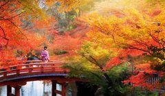 3 Festival Kuliner Musim Gugur di Jepang yang Wajib Kamu Kunjungi