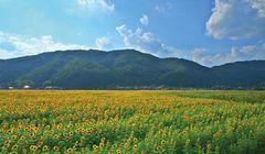 5 Tempat Wisata Musim Panas Menakjubkan di Hyogo