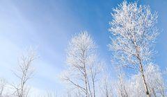 5 Hal Unik Seputar Musim Dingin di Jepang