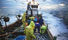 Hal yang Perlu Kamu Ketahui Tentang Industri Perikanan di Jepang