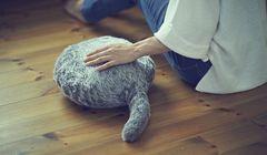 Bikin Gemas! Robot Bantal Ekor Kucing Qoobo Rilis Pilihan Warna Hitam