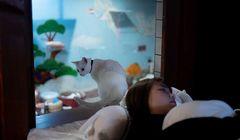 Bikin Gemas, Hotel di Osaka Tawarkan Menginap Bersama Kucing
