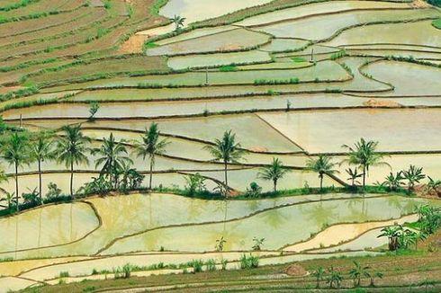 Perkuat Data Pertanian, Kementan Gandeng Lapan