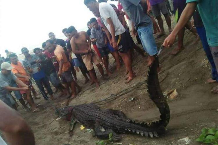 Warga Desa Kayeli, Kabupaten Buru, Maluku menangkap seekor buaya di muara sungai tersebut, Kamis (4/7/2019)