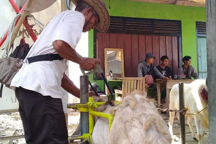 Ahmad Seiko Minarjo (60) merapikan tanduk kambing yang akan dijadikan hewan kurban di Pasar Hewan Desa/Kecamatan Karangpucung, Kabupaten Cilacap, Jawa Tengah, baru baru ini.