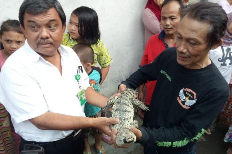 Seorang warga Kota Bogor bernama Wowo Kuswana (54) menyerahkan seekor buaya muara kepada petugas BKSDA Wilayah I Bogor, Rabu (14/8/2019).