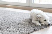 Empat Langkah Mudah Bersihkan Noda pada Karpet
