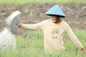 Program Padat Karya, Upaya Kementan Sejahterakan Petani