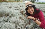 3 Bukit dan Padang 'Edelweis', Tempat di Bali Ini Asyik Buat Foto-foto