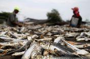 Popularitas Bau Ikan Asin Meroket, Dari Mana Aroma Khasnya Muncul?
