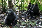 Studi pada Monyet Tunjukkan Kenapa Kita Tidak Perlu Takut Konflik