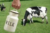 Kurangi Nafsu Makan dengan Minum Susu Setiap Pagi