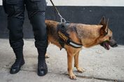 Ilmuwan Latih Anjing untuk Deteksi Malaria Hanya dari Bau Kaus Kaki